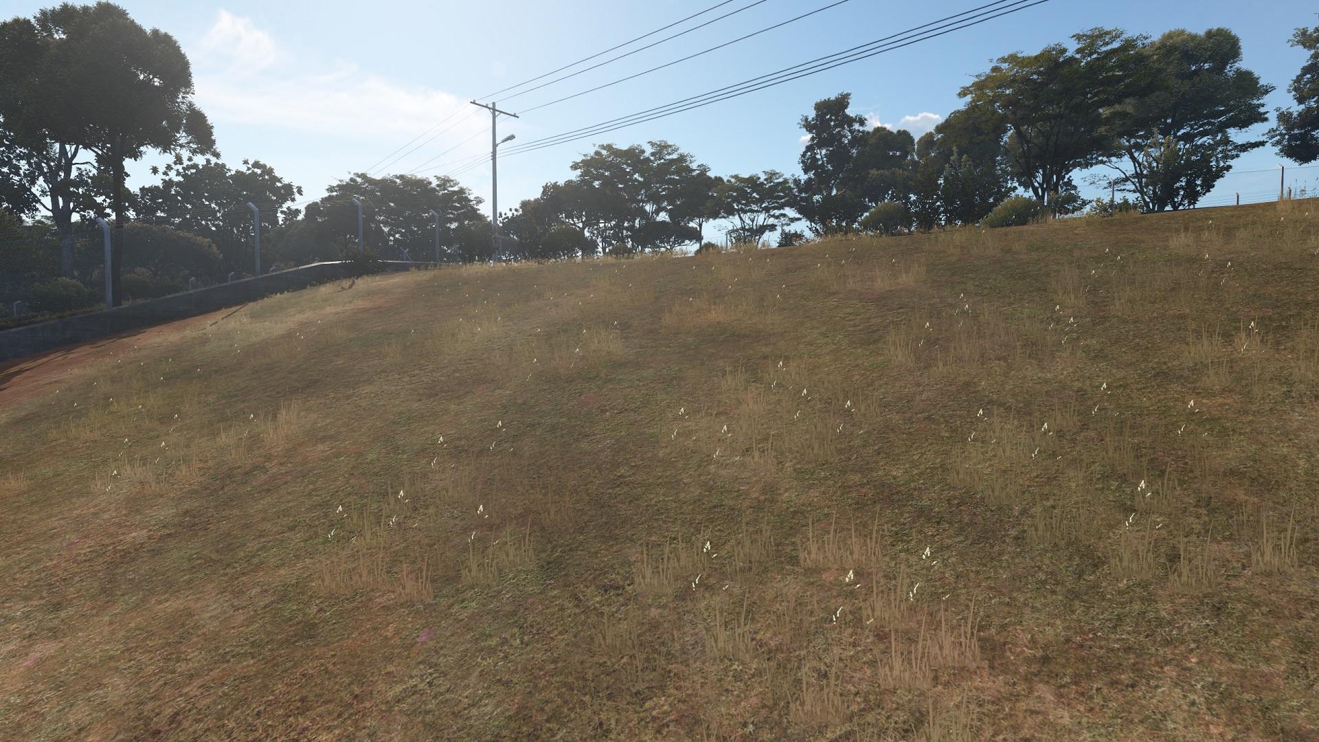 new_livegrass.jpg